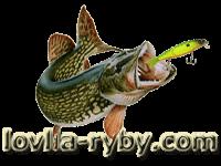 Ловля рыбы - практические советы