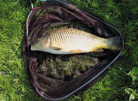 прикормка для рыбы